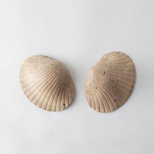 Shell by Hiroto Nakanishi contemporary artwork