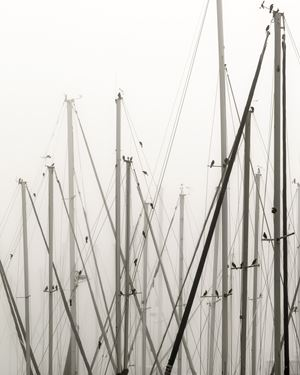 Masts by Anastasia Samoylova contemporary artwork