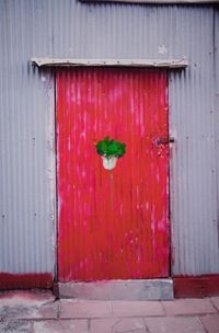 Chinese Cabbage by Honggoo Kang contemporary artwork photography