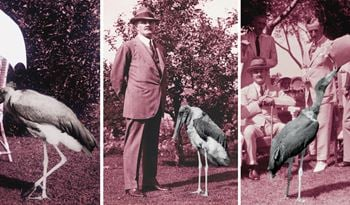 Heba Y. Amin Brings Storks and Drones to London