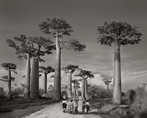 Off to Market by Beth Moon contemporary artwork