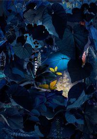 Floresta Negra #5 by Ruud van Empel contemporary artwork print