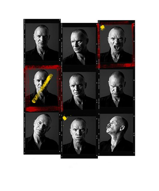 Sting Contact Sheet by Andy Gotts contemporary artwork