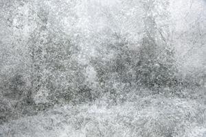 Snow by Kim Boske contemporary artwork