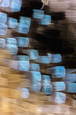 Lycaeides melissa (Melissa Blue) wing scales, 2 by Fiona Pardington contemporary artwork