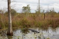 Untitled #2 (Swamps) by Catherine Opie contemporary artwork photography, print