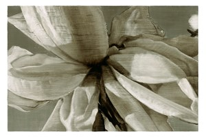 Rose/Duotone by Tim Maguire contemporary artwork