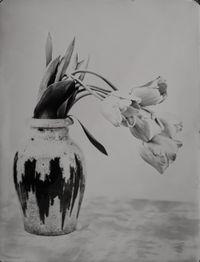 Tulpis by Steffen Diemer contemporary artwork print