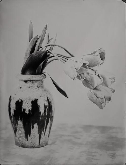Tulpis by Steffen Diemer contemporary artwork