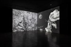 Triste champignonniste by Anne-Charlotte Finel contemporary artwork