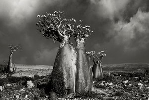 Desert Rose (Wadi Fa Lang) by Beth Moon contemporary artwork