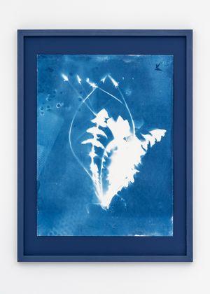 Dandelion (Taraxacum) by Tue Greenfort contemporary artwork