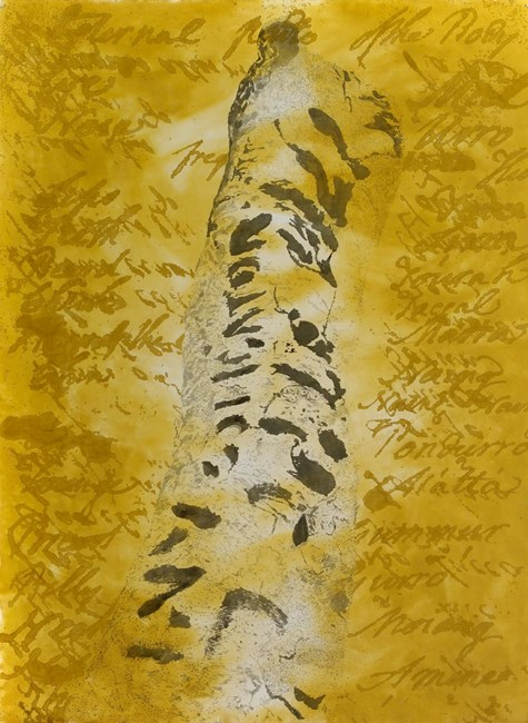 the investigator tree by Judy Watson contemporary artwork