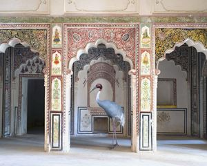 The Search for Sattva, Ahhichatragarh Fort, Nagaur by Karen Knorr contemporary artwork
