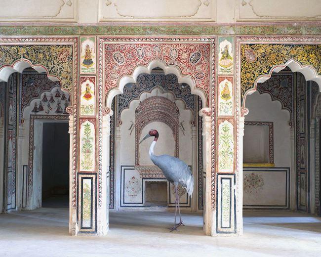 The Search for Sattva, Ahhichatragarh Fort, Nagaur by Karen Knorr contemporary artwork