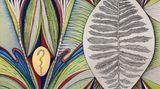Contemporary art exhibition, Faith Wilding, CONDO São Paolo: Anat Ebgi at at Galeria Jaqueline Martins, Culver City, USA