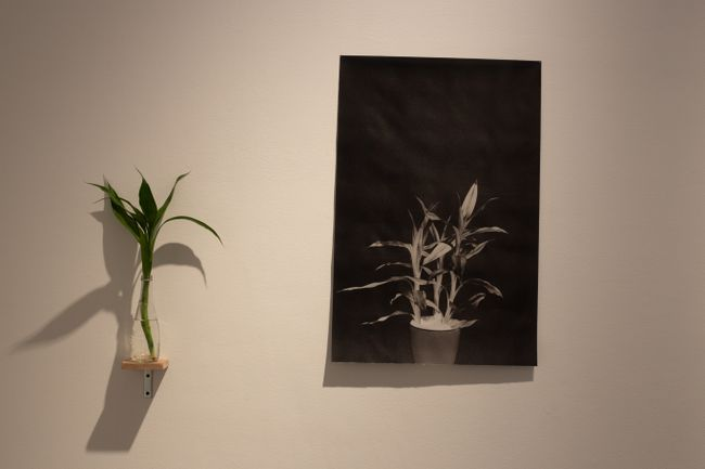 Notes on Dracaena 'Marea' 2001 by Issay Rodriguez contemporary artwork