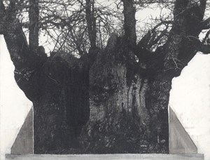 Drawing of old trees on wintry days during 2007 -2014 by Patrick Van Caeckenbergh contemporary artwork