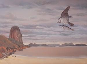 Osprey in Praia Vermelha, Pan de Azucar, Rio de Janeiro by Alberto Baraya contemporary artwork