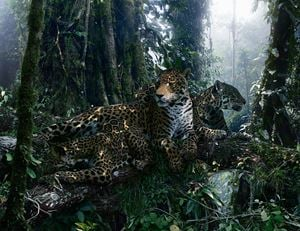 Untitled #183 by Simen Johan contemporary artwork