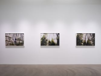 Exhibition view: Catherine Opie, So long as they are wild, Lehmann Maupin, Hong Kong May (17 May–7 July 2018). Courtesy the artist and Lehmann Maupin. Photo: Kitmin Lee.