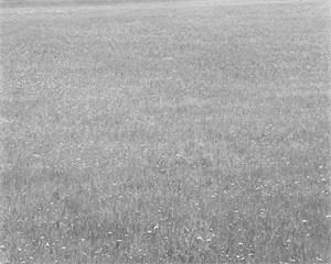 PRINCE EDWARD ISLAND 2002 #98 by Taiji Matsue contemporary artwork