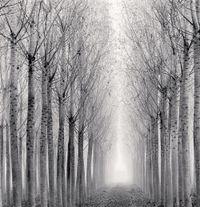 Tunnel of Poplars, Boretto, Reggio Emilia, Italy by Michael Kenna contemporary artwork print