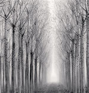 Tunnel of Poplars, Boretto, Reggio Emilia, Italy by Michael Kenna contemporary artwork