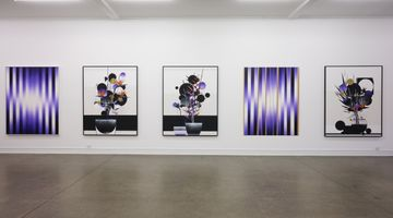 Contemporary art exhibition, Martin Basher, Birds of Paradise at Starkwhite, Auckland