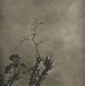 Fog-Branch No.3 by Lu Yanpeng contemporary artwork