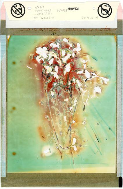 Foresight No.22 预见 No.22 by Jiang Pengyi contemporary artwork