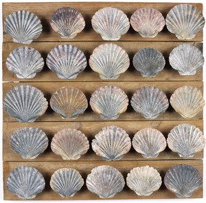 Untitled (25 scallop shells) by Rosalie Gascoigne contemporary artwork