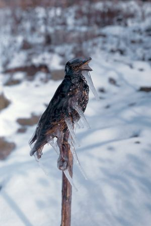 Frozen Starling by Lois Weinberger contemporary artwork
