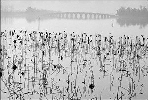 CHINA. Beijing. Former Summer Palace. Dead lotus flowers on the Kunming Lake. by René Burri contemporary artwork