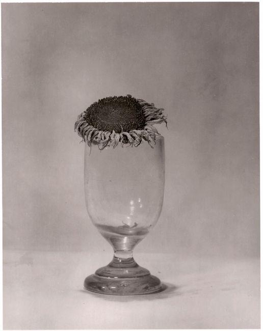 Helianthus by Walter Schels contemporary artwork
