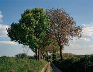 Entwined - Trees in the middle of a former trench at the Battle of the Marne by Tomoko Yoneda contemporary artwork