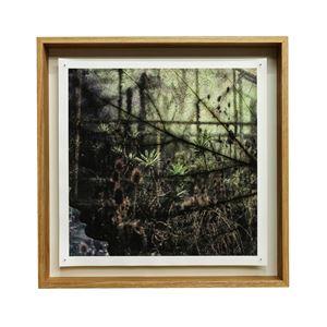 Shrubs 8 by Tilyen Mucik contemporary artwork