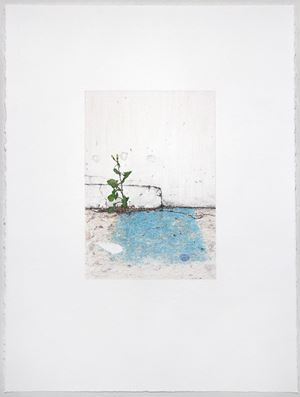 Shoegazer (a weed is a plant in the wrong place) by Andrew Browne contemporary artwork