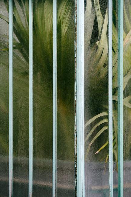Arecaceae livistonia I by Samuel Zeller contemporary artwork