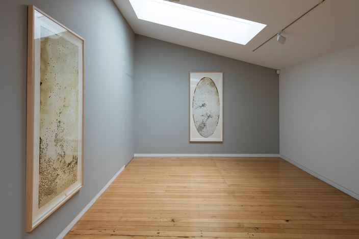 Exhibition view, Joyce Campbell, subtilis, 2016. Courtesy Two Rooms, Auckland.