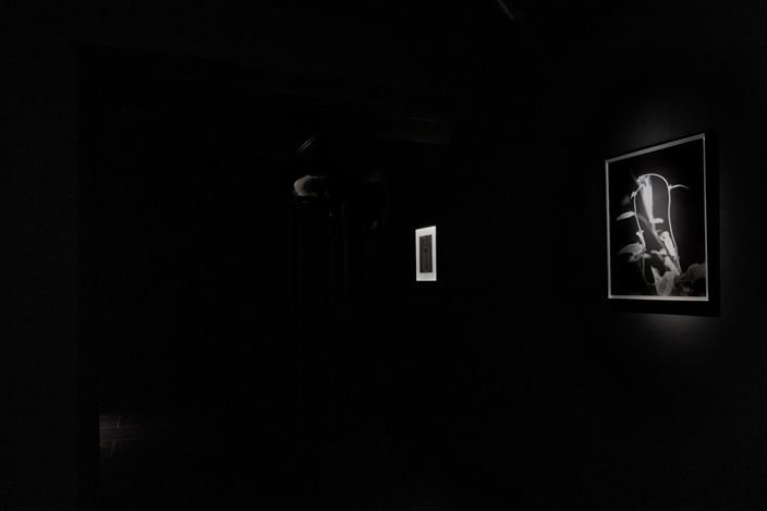 Exhibition view: Taro Masushio,Rumor Has It,Empty Gallery, Hong Kong (23 December–20 March 2021). Courtesy the artist and Empty Gallery. Photo: Michael Yu.