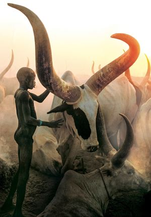 Dinka Boy with Long Horned Bull, South Sudan by Carol Beckwith & Angela Fisher contemporary artwork