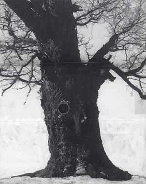 Drawing of Old Trees during wintry days 2007-2014 by Patrick Van Caeckenbergh contemporary artwork