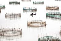 'Fujian #16 - Circles', Coastal Geometries, China by Tugo Cheng contemporary artwork photography, print