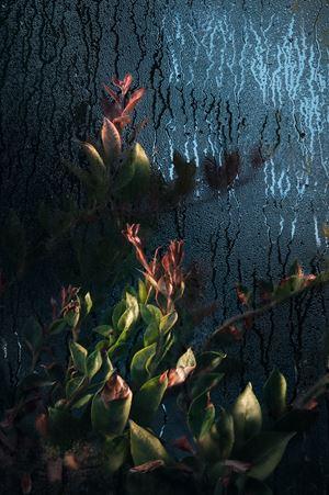 Cactaceae pereskia by Samuel Zeller contemporary artwork