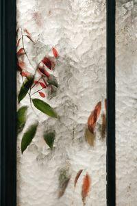 Lauraceae Cinnamomum by Samuel Zeller contemporary artwork photography