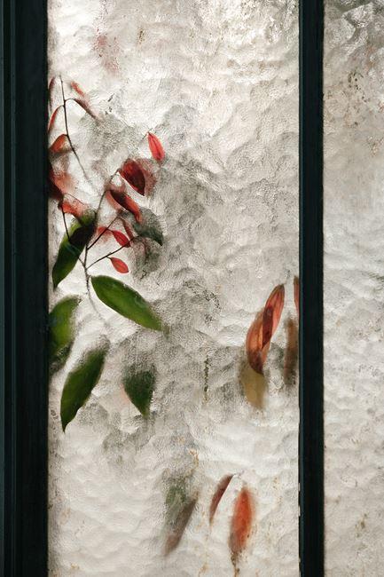 Lauraceae Cinnamomum by Samuel Zeller contemporary artwork