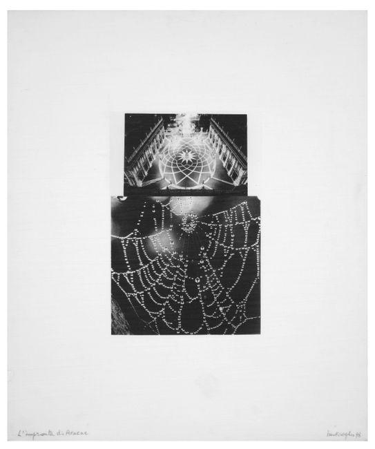 Arachne's Footprint by Mirella Bentivoglio contemporary artwork
