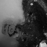 Oil Spill (5) by Rivane Neuenschwander contemporary artwork photography, print