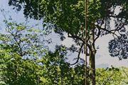 D.120 Botanical Gardens Singapore by Gary Carsley contemporary artwork 4